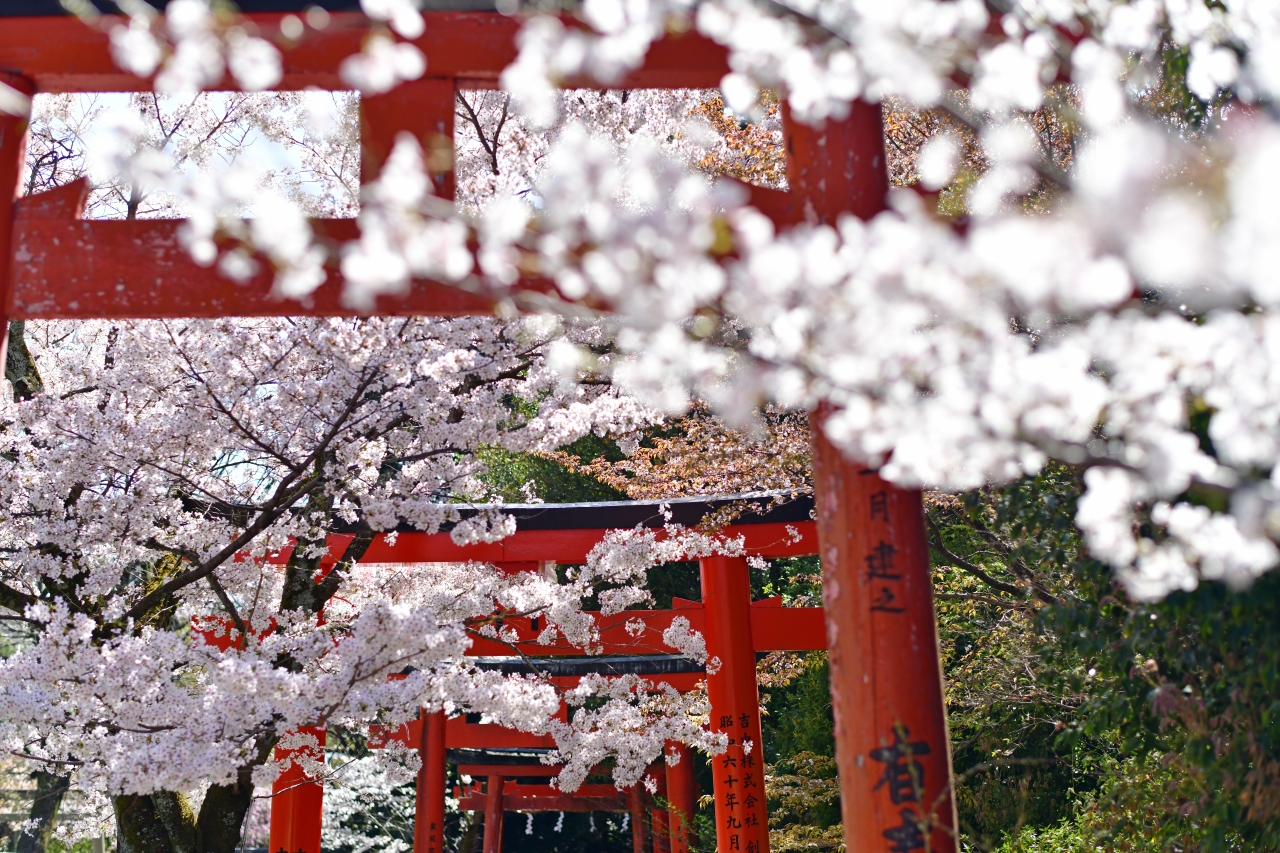 Liburan ala Jepang di Sakura Hills Tawangmangu - Where Your Journey Begins